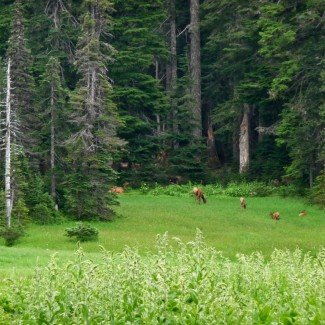 Government Meadows Naches Pass Trail